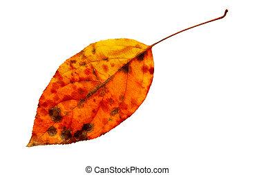 さくらんぼ, 葉