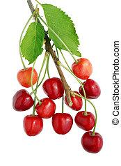 さくらんぼ, branch., 甘い, こつ, 赤いベリー, 野生, 森林, 11