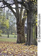 すてきである, 公園, 中に, 秋