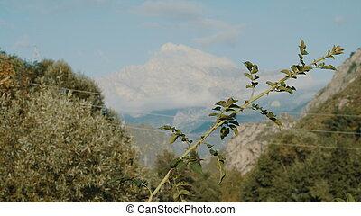 そこに, 茎, 草, 雪が多い, 高く, 背景, に対して, 終わり, grass., 。, 山