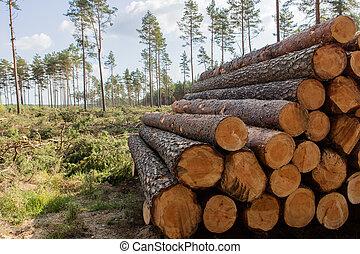 たたき切った, 積み重ねられた, 森林, 木