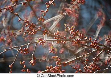 つぼみ, つぼみ, 葉, 木, 花, カバーされた, 花が咲く