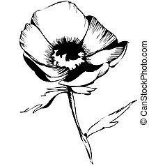 つぼみ, スケッチ, 花, 白い背景