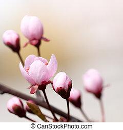 つぼみ, 木, 花, ブランチ, さくらんぼ