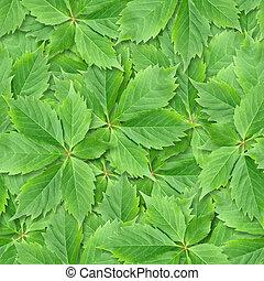 つる, leafs, seamless, バックグラウンド。