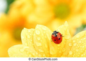 てんとう虫, 上に, 黄色の花