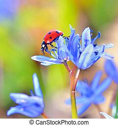 てんとう虫, 単一, 花, すみれ