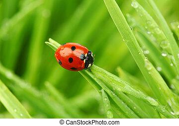 てんとう虫, 草