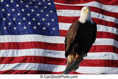 とまった, ワシ, アメリカ人, はげ, 旗