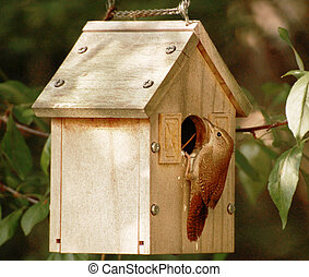 とまった, 母, 鳥, birdhouse, 開始