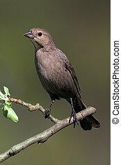 とまり木, 鳥