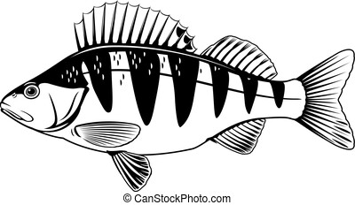 とまり木, fish, イラスト
