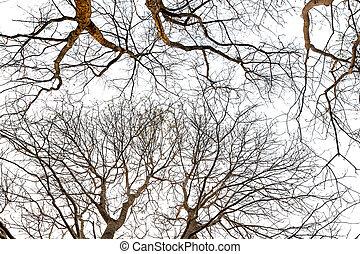∥ない∥, 葉, 木, 背景, 下に, シルエット, 白
