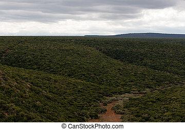 によって, 緑の森林, 薮が多い, 道