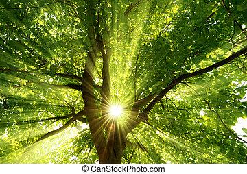によって, 落ちる, 木, 劇的に, sunrays