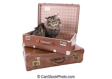 ねこ, イラン人, スーツケース, モデル, 型