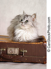 ねこ, スーツケース