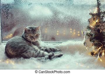 ねこ, 中に, ∥, 冬, 窓
