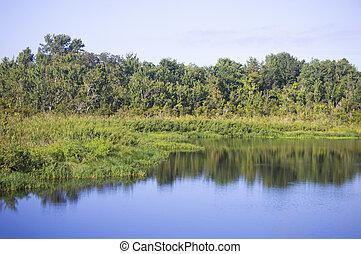 のまわり, 木, 水, 川