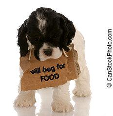 のまわり, 食物, 施しを請う, -, 犬, 印, スパニエル, アメリカ人, コッカー, 子犬, 首