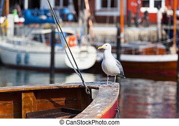 のように, 船員, 板, 肖像画, 船, 鳥