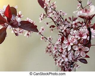 の上, 桜, 春, バックグラウンド。, 終わり, ぼんやりさせられた, アップル