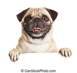 の上, billboard., 上に, pug 犬, ∥あるいは∥, 背景, ブランク, 肖像画, 白, 旗, 印。