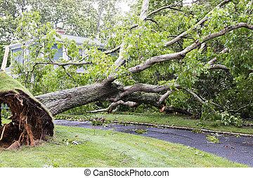 の間, 木, 私道, 落ちる, 上に, 嵐, isaias, 家, トロピカル