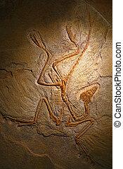 びっくり仰天させられた, archaeopteryx, 残物, の上, 化石, 終わり