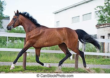 ふざけている, パドック, 馬, 小走りに走ること