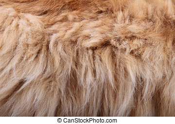 ふんわりしている, 毛皮, 動物, 手ざわり