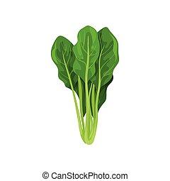 ほうれんそう, サラダ, 健康, 菜食の食物, イラスト, 葉, ベクトル, 背景, 新たに, 有機体である, 白