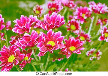 ぼんやりさせられた, 自然, 花, バックグラウンド。