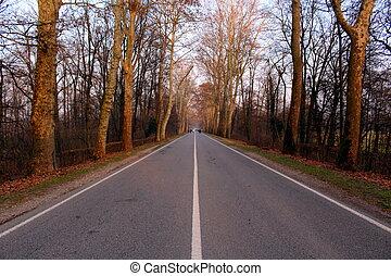 まっすぐに, 木, 道
