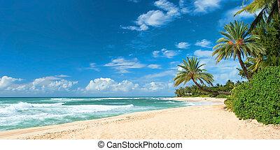 やし, パノラマ, 木, 海洋, 心を動かされない, 背景, 空色, 浜, 砂
