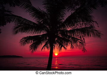 やし, 日没, トロピカル, 木, 浜。, シルエット