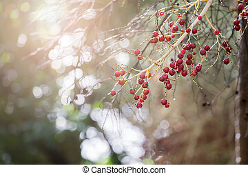 やし, 果樹, 赤