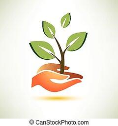 やし, 植物, 概念, 生態学の記号