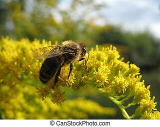 よく働く, 蜂