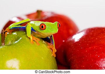 りんご, 木, じろじろ見られた, カエル, 赤