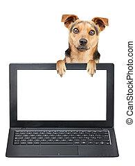 わずかしか, のぞくこと, スクリーン, 隔離された, 犬, の後ろ, ブランク, ラップトップ