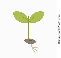 わずかしか, 植物, 実生植物