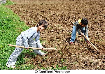 わずかしか, 農夫, 農場, 仕事, 子供