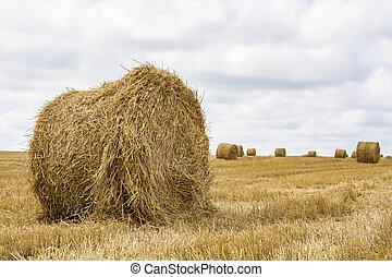 わら, 夏, 収穫される, ベール, フィールド