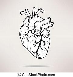 アイコン, 体, 心, icon., 上に, ∥, 白, バックグラウンド。, ベクトル, illustration.