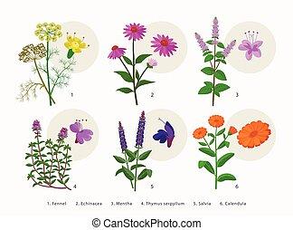 アイコン, 植物, ハーブ, drawings., serpyllum, 平ら, 隔離された, -, calendula...