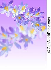 アイリス, 花が咲く, ぼやけた背景, 春