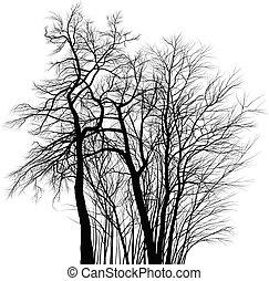 アカシア, 木