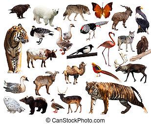 アジア人, 動物群