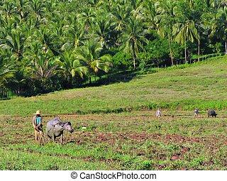 アジア人, 農夫